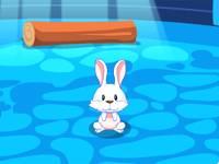 Dom królików