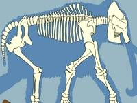 Skeleton Jigsaws